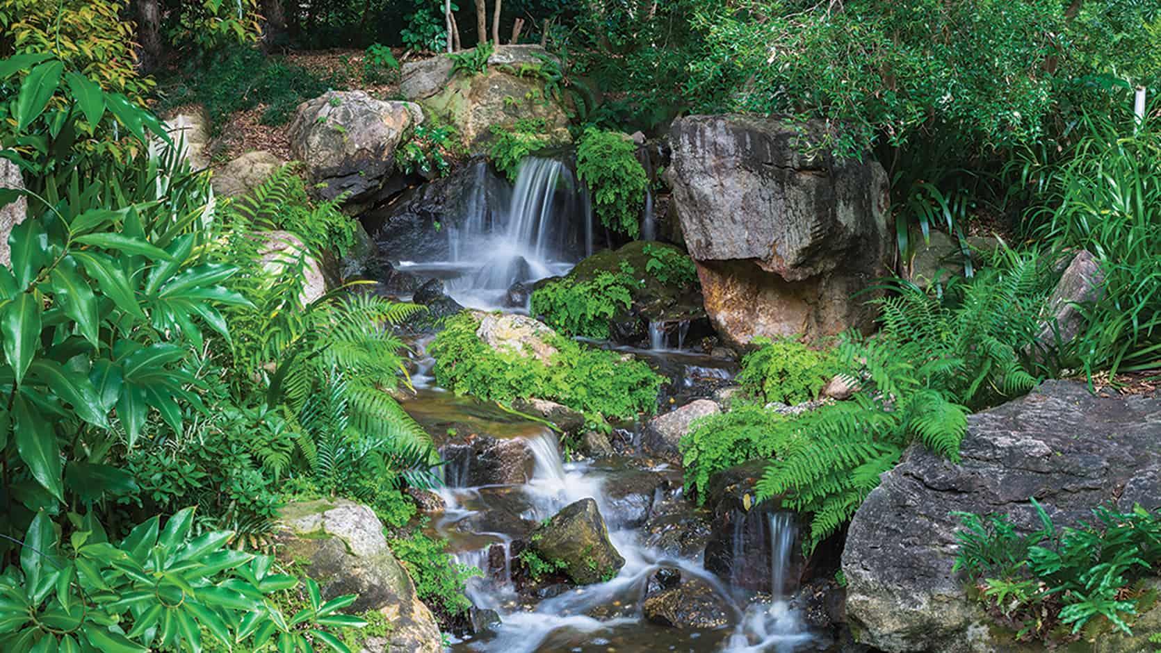 Brisbane Botanic Gardens Mt Coot Tha Anese Garden Garden
